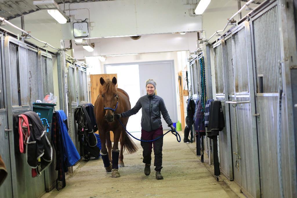 Kuvassa hevoshierontaa opiskeleva Iida Korhonen taluttaa hevosta tallin sisällä.